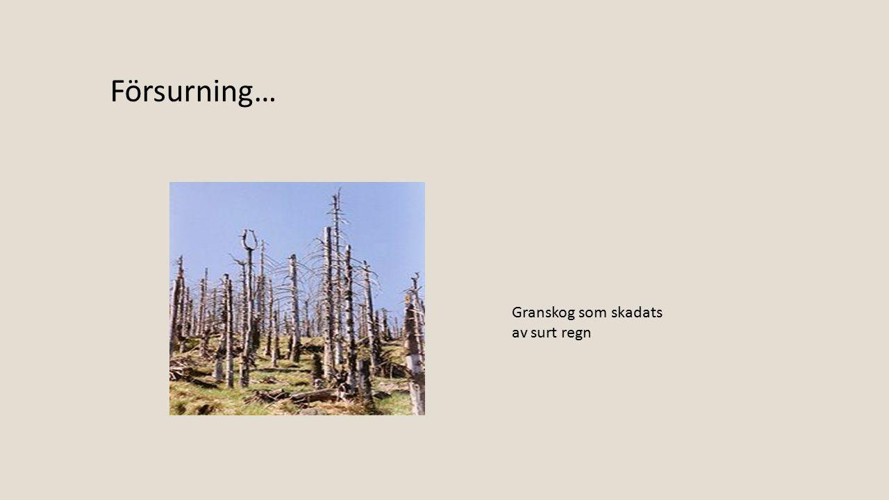 Försurning… Granskog som skadats av surt regn