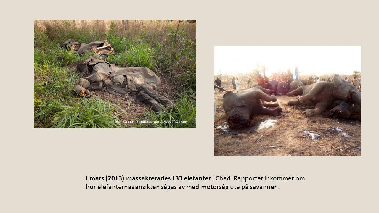 I mars (2013) massakrerades 133 elefanter i Chad
