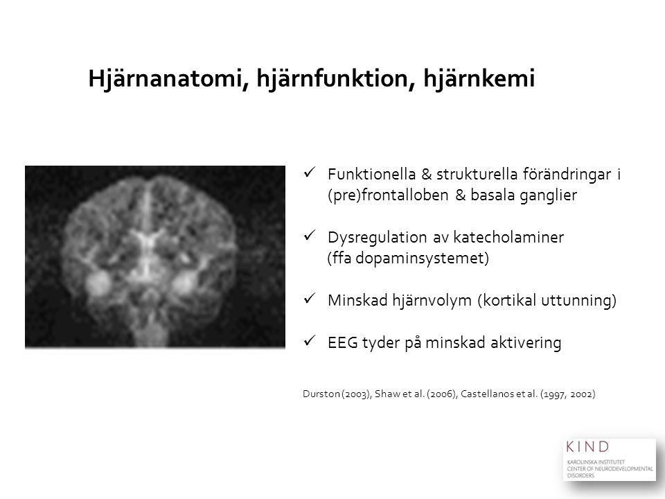 Hjärnanatomi, hjärnfunktion, hjärnkemi