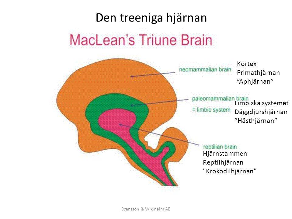Den treeniga hjärnan Kortex Primathjärnan Aphjärnan
