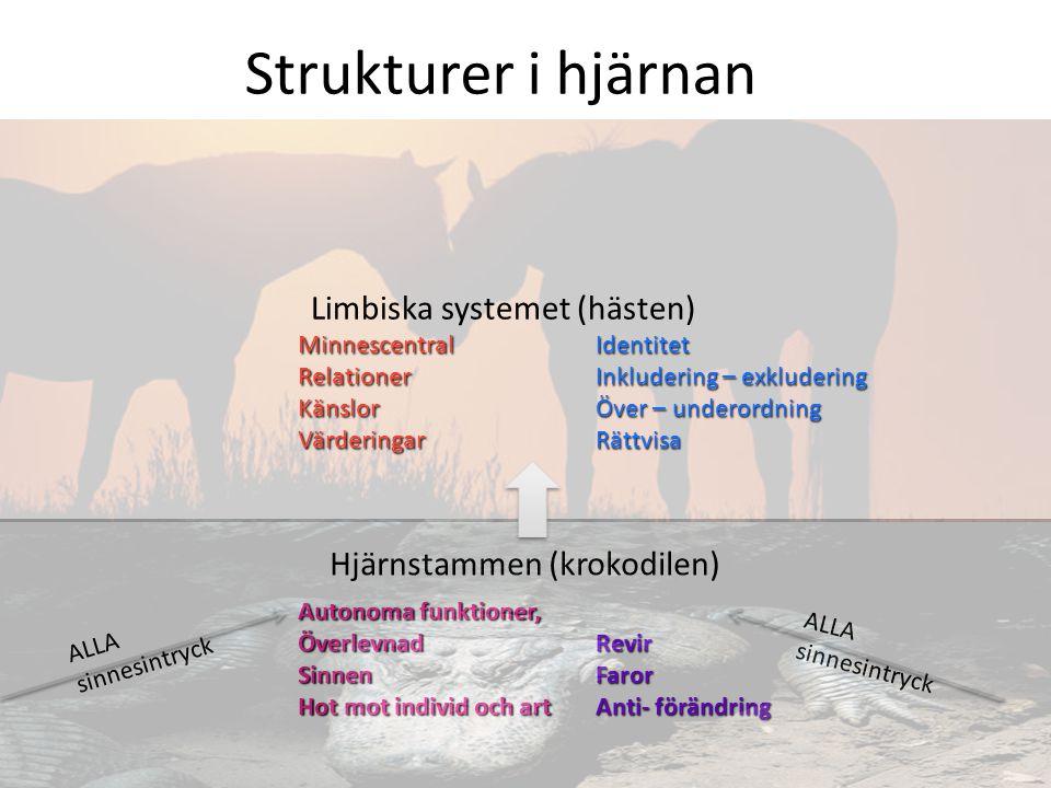 Strukturer i hjärnan Limbiska systemet (hästen)