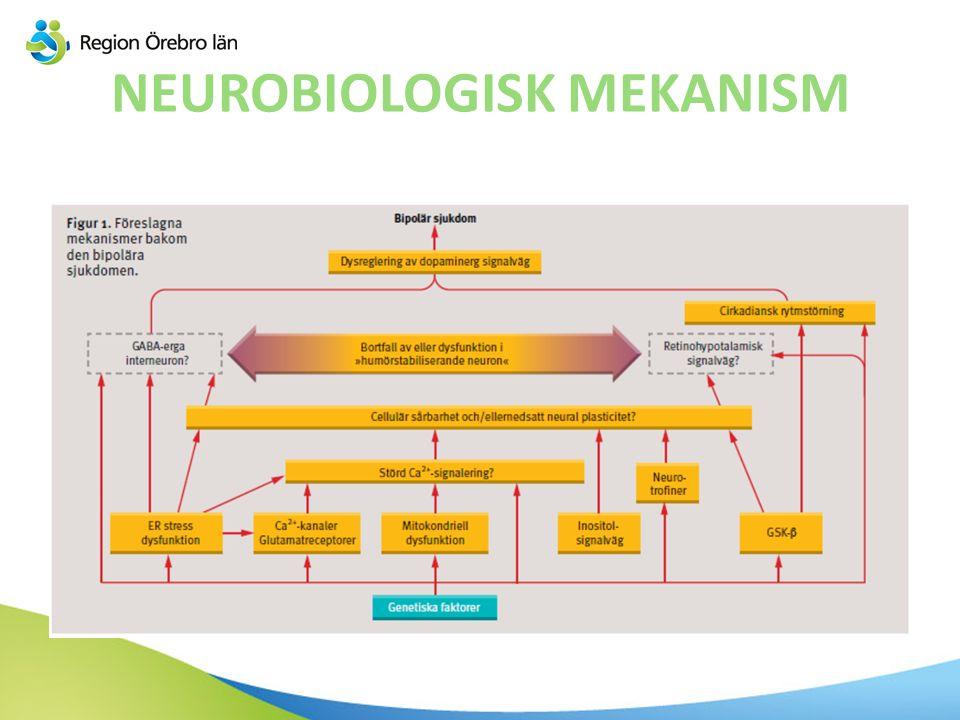 NEUROBIOLOGISK MEKANISM