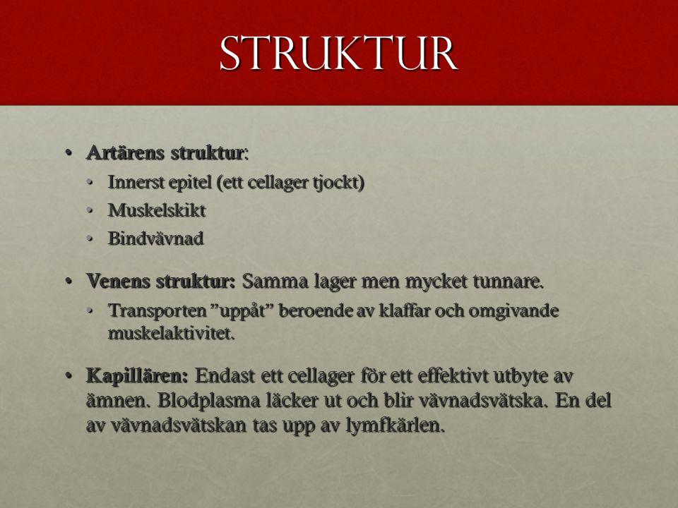 Struktur Artärens struktur: