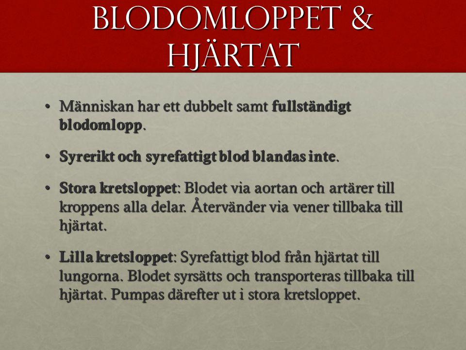 Blodomloppet & hjärtat