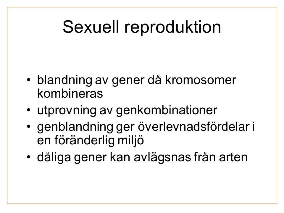 Sexuell reproduktion blandning av gener då kromosomer kombineras