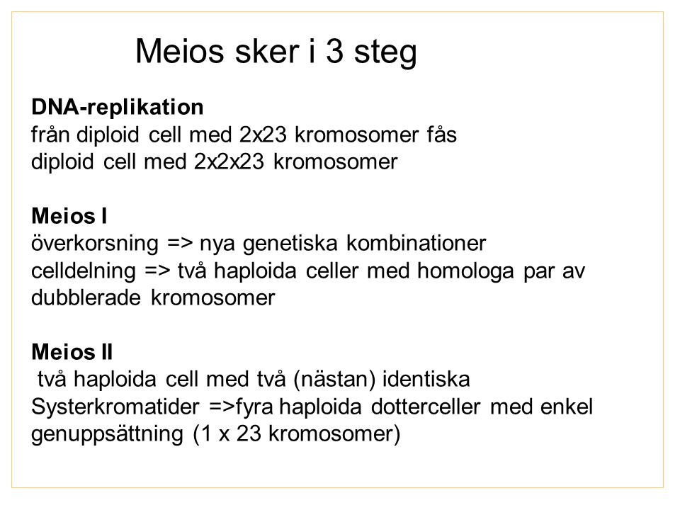 Meios sker i 3 steg DNA-replikation