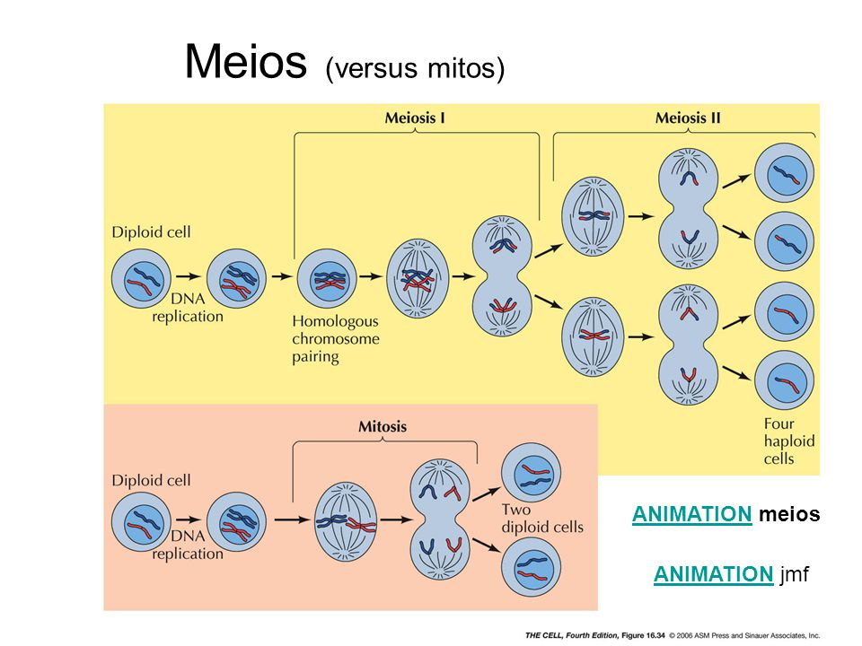 Meios (versus mitos) ANIMATION meios ANIMATION jmf