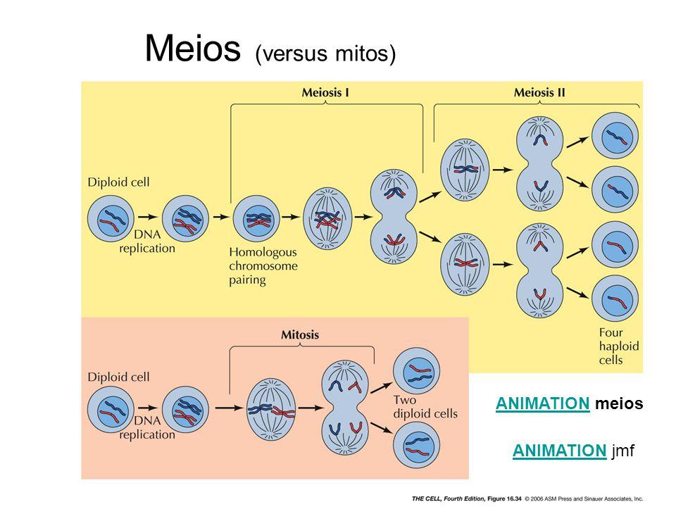 Meios (versus mitos) ANIMATION meios ANIMATION jmf