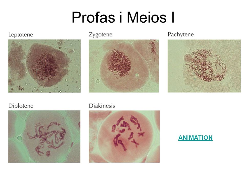 Profas i Meios I \Figures_Hi-res\ch14\cell3e14331.jpg ANIMATION