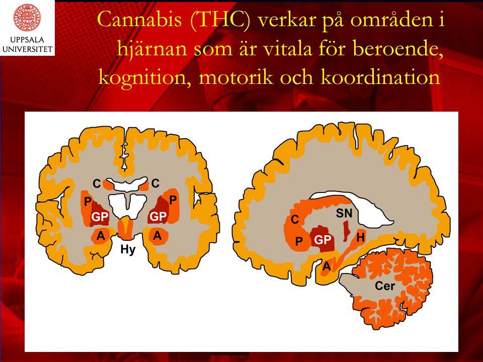 Cannabis (THC) verkar på områden i hjärnan som är vitala för beroende,