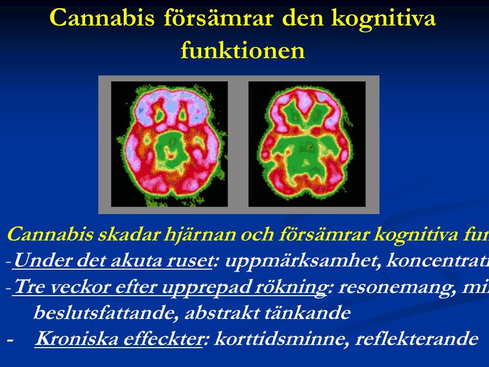 Cannabis försämrar den kognitiva funktionen
