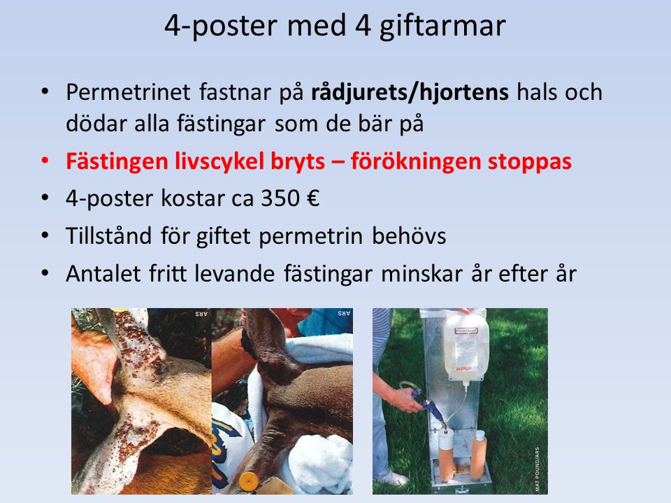 4-poster med 4 giftarmar Permetrinet fastnar på rådjurets/hjortens hals och dödar alla fästingar som de bär på.