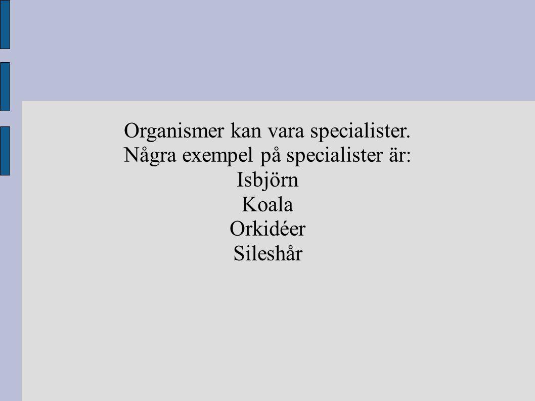 Organismer kan vara specialister. Några exempel på specialister är: