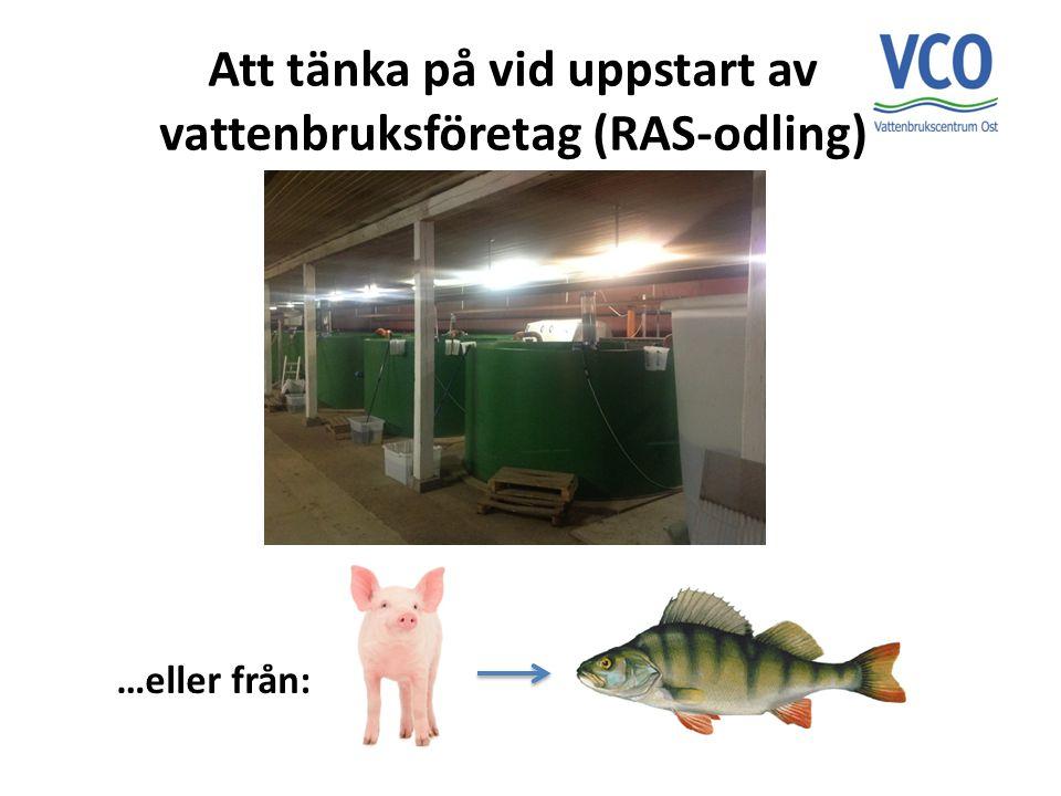 Att tänka på vid uppstart av vattenbruksföretag (RAS-odling)
