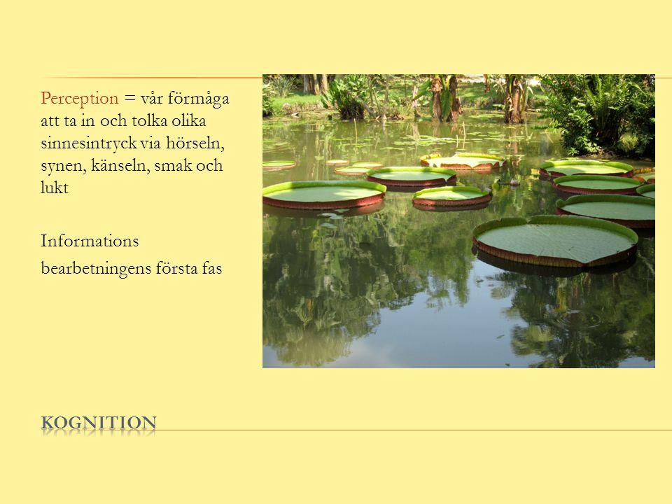 Perception = vår förmåga att ta in och tolka olika sinnesintryck via hörseln, synen, känseln, smak och lukt