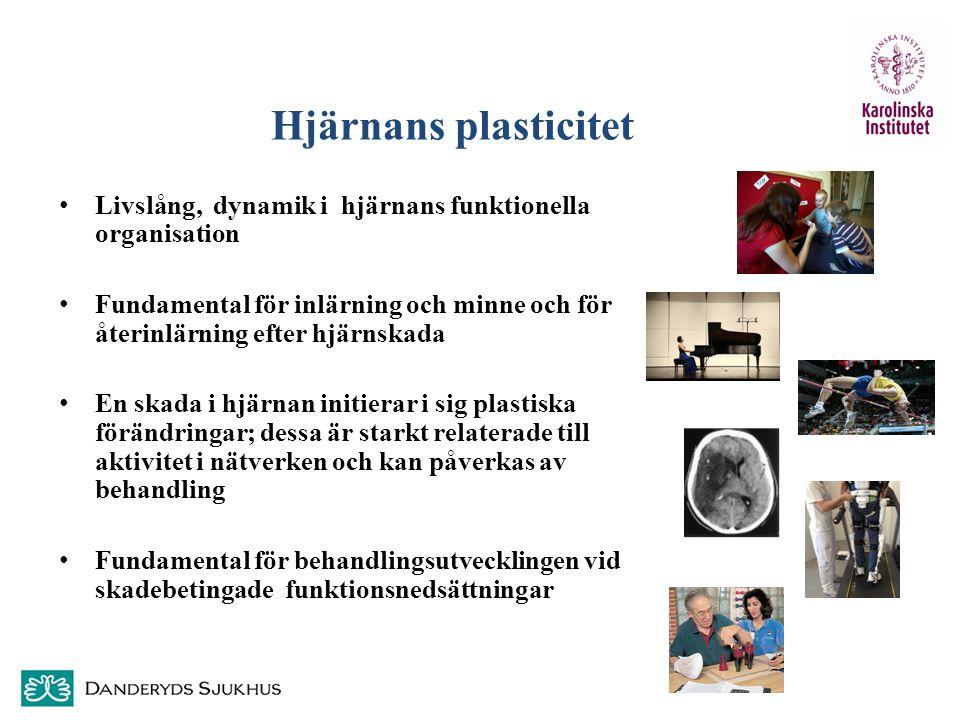 Hjärnans plasticitet Livslång, dynamik i hjärnans funktionella organisation.