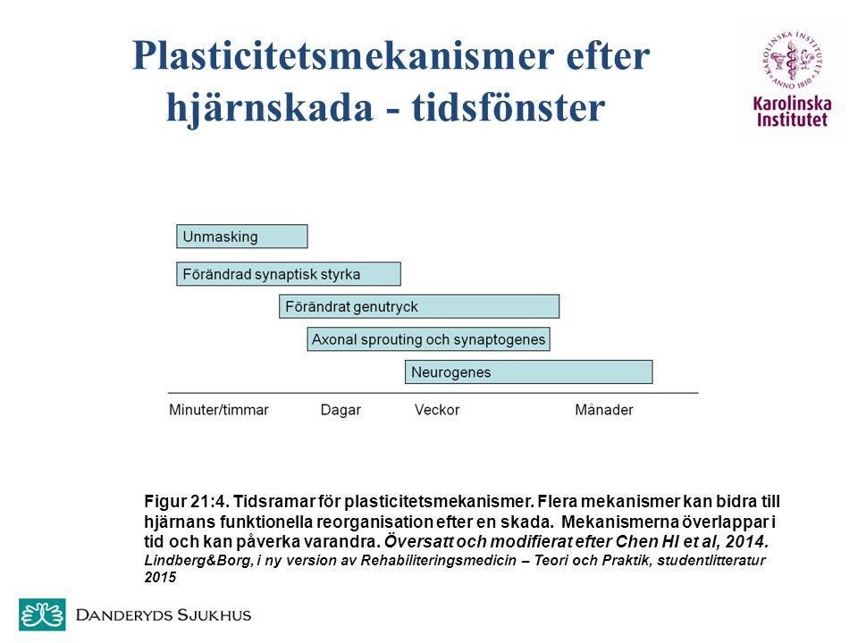Plasticitetsmekanismer efter hjärnskada - tidsfönster
