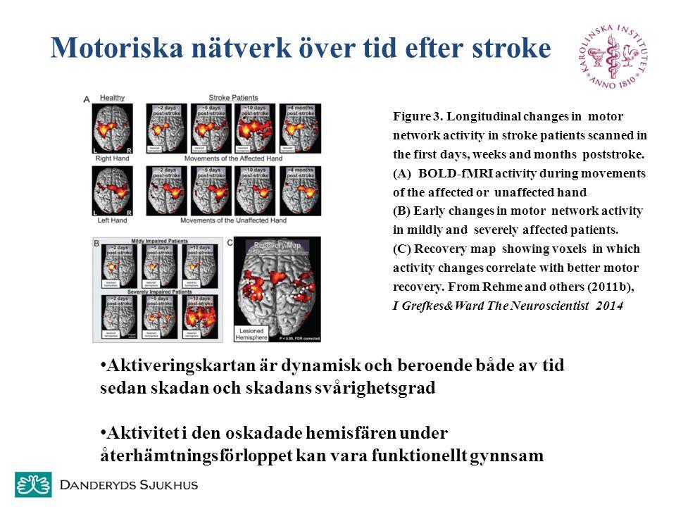 Motoriska nätverk över tid efter stroke