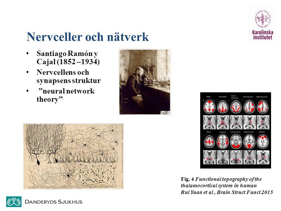 Nervceller och nätverk