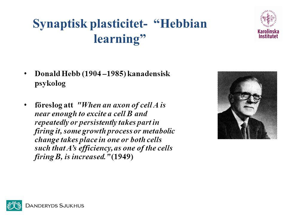 Synaptisk plasticitet- Hebbian learning