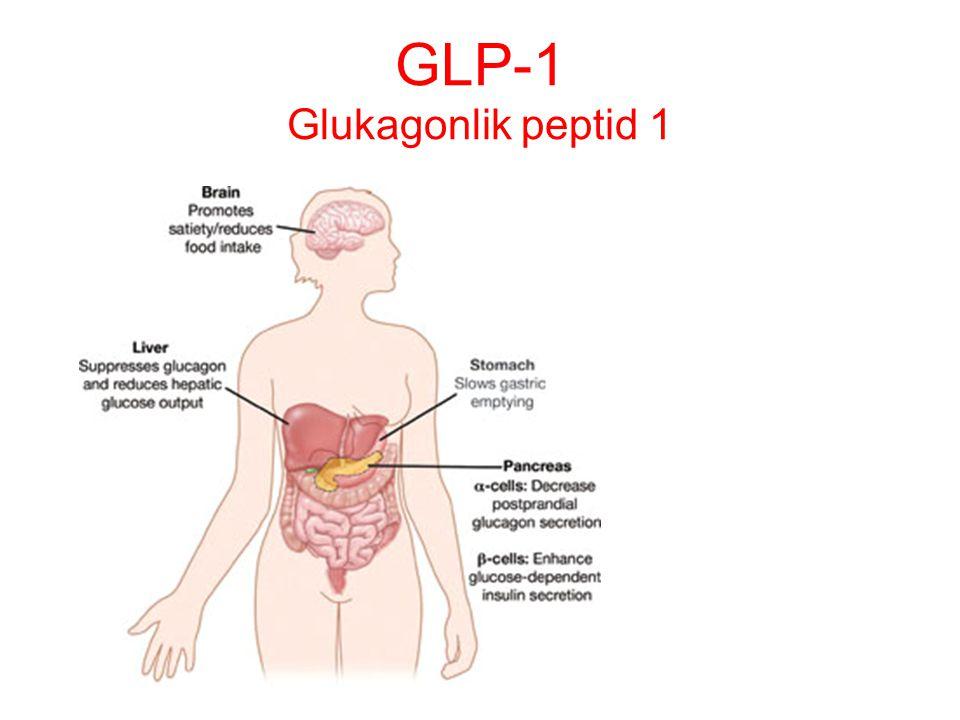 GLP-1 Glukagonlik peptid 1
