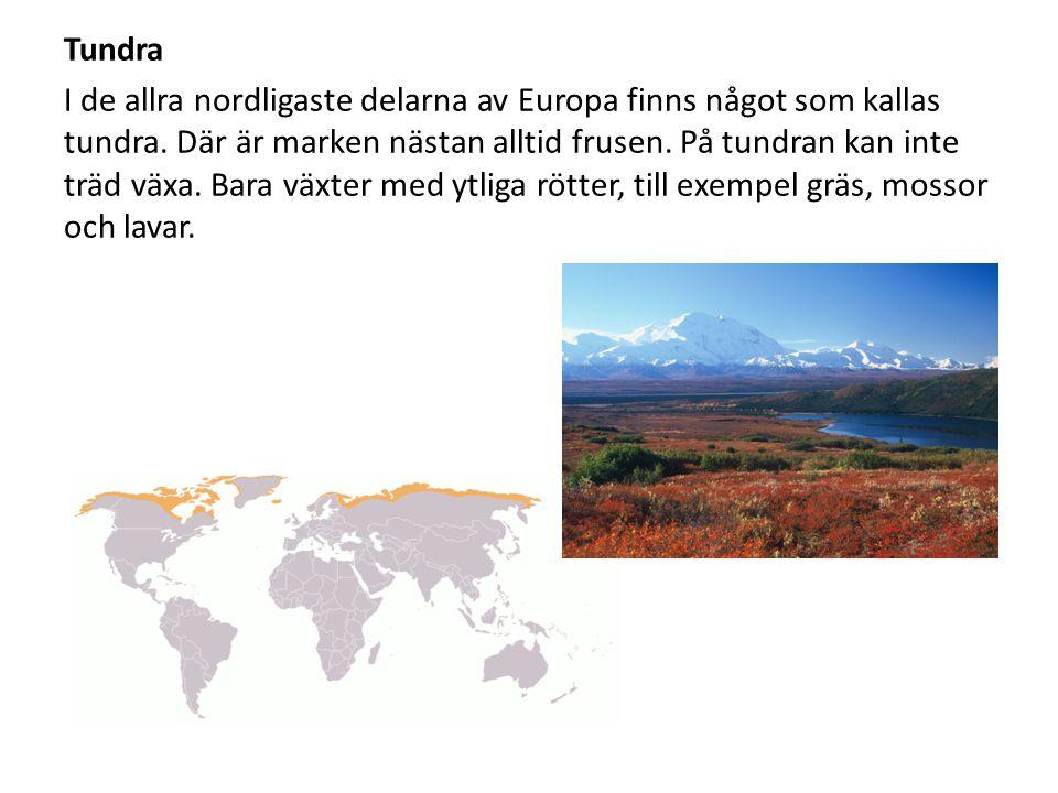 Tundra I de allra nordligaste delarna av Europa finns något som kallas tundra.