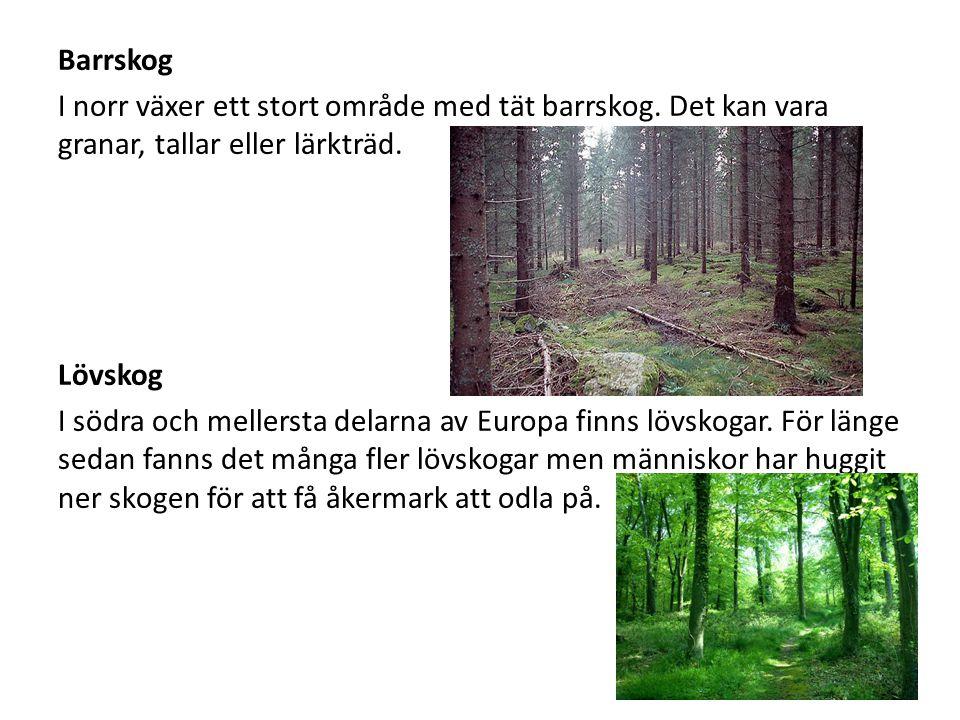 Barrskog I norr växer ett stort område med tät barrskog. Det kan vara granar, tallar eller lärkträd.