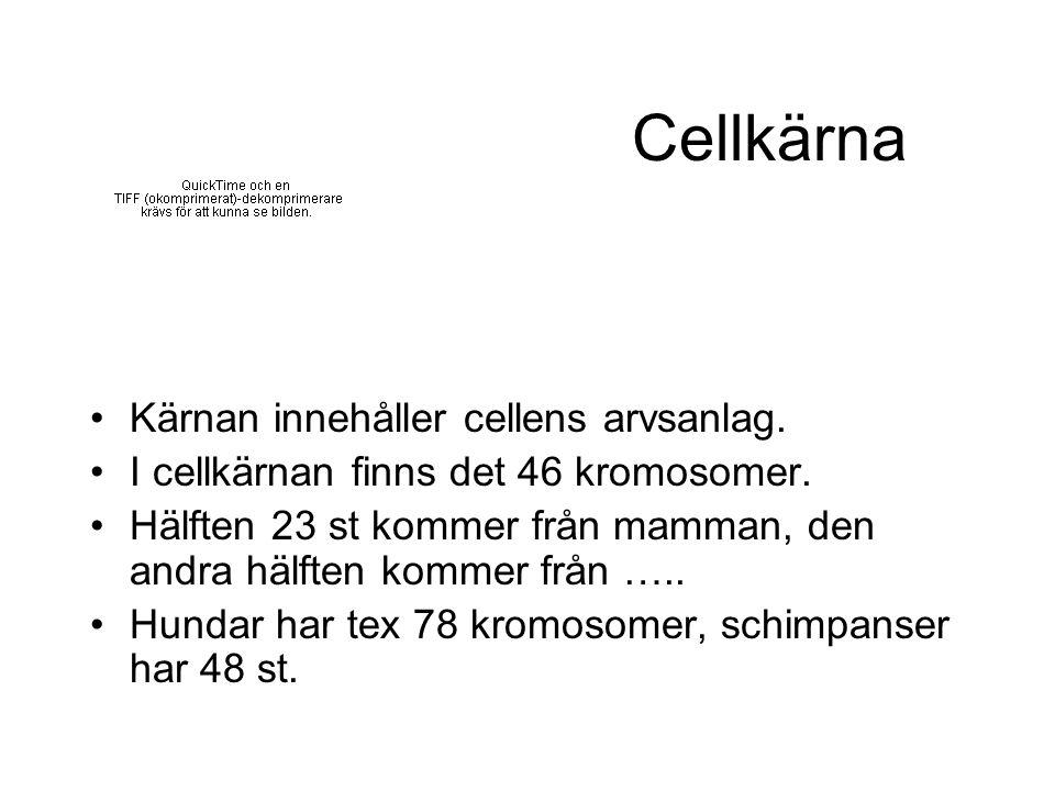 Cellkärna Kärnan innehåller cellens arvsanlag.