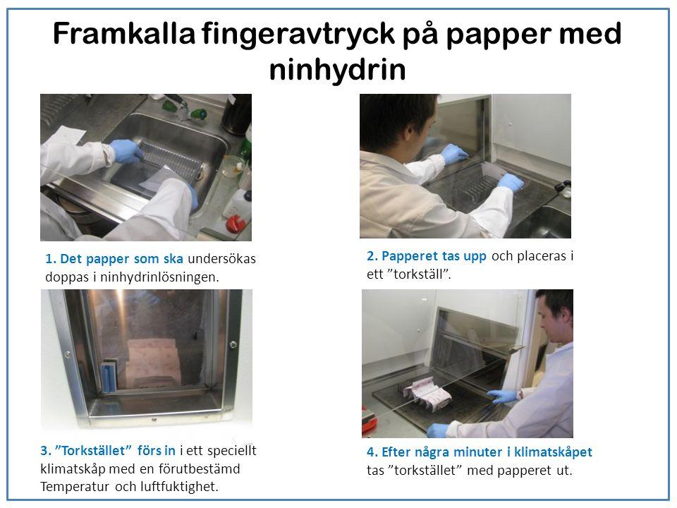 Framkalla fingeravtryck på papper med ninhydrin