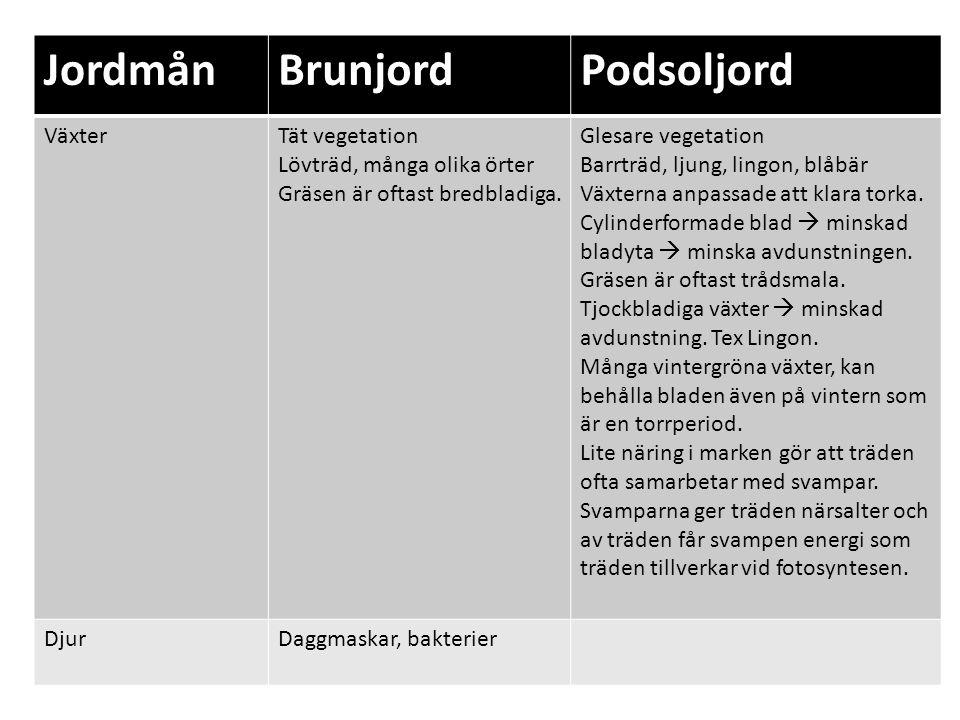 Jordmån Brunjord Podsoljord Växter Tät vegetation