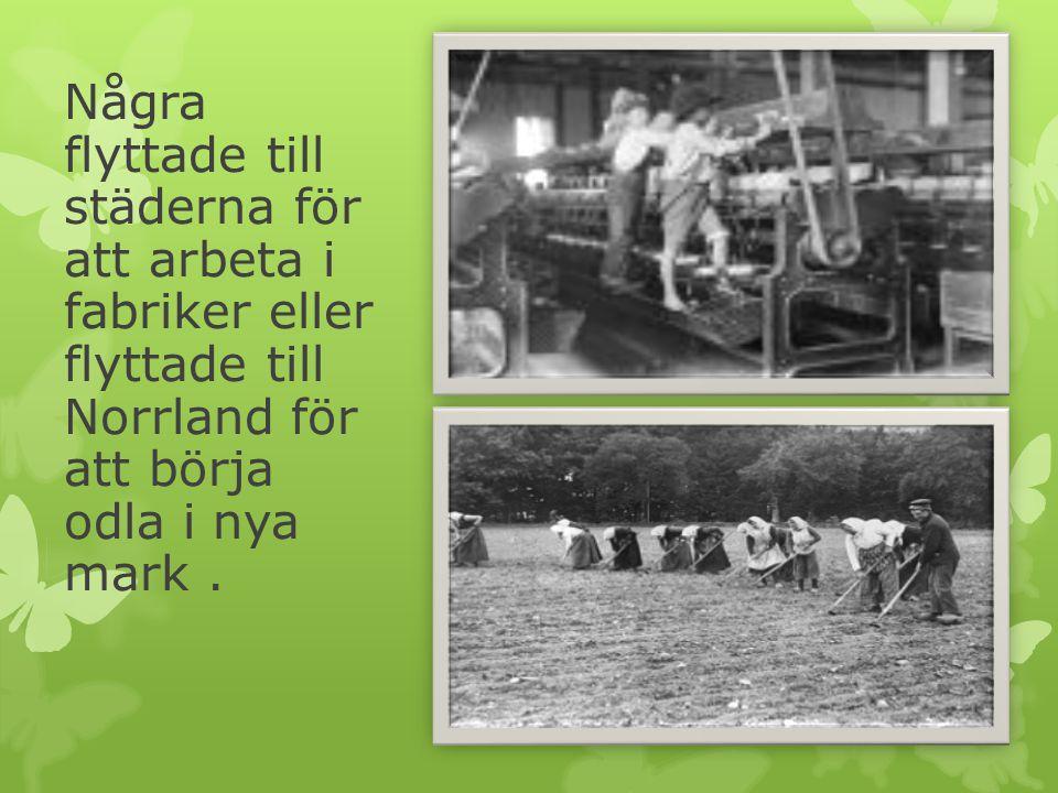 Några flyttade till städerna för att arbeta i fabriker eller flyttade till Norrland för att börja odla i nya mark .