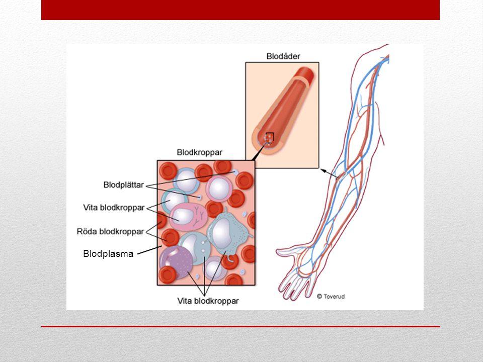 Blodplasma