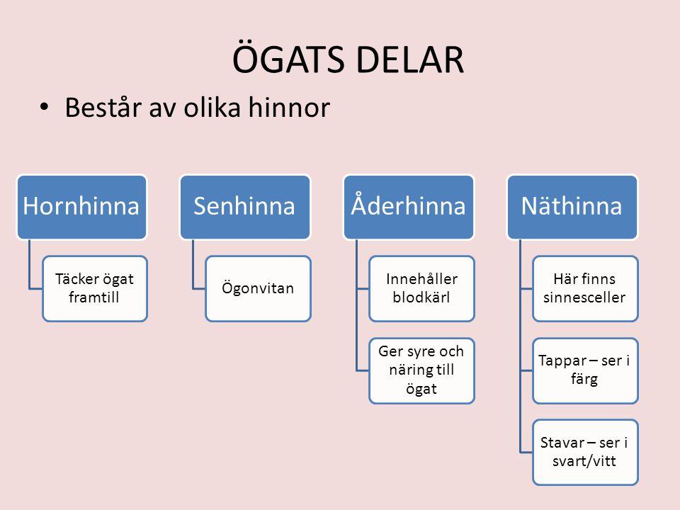 ÖGATS DELAR Består av olika hinnor Hornhinna Täcker ögat framtill