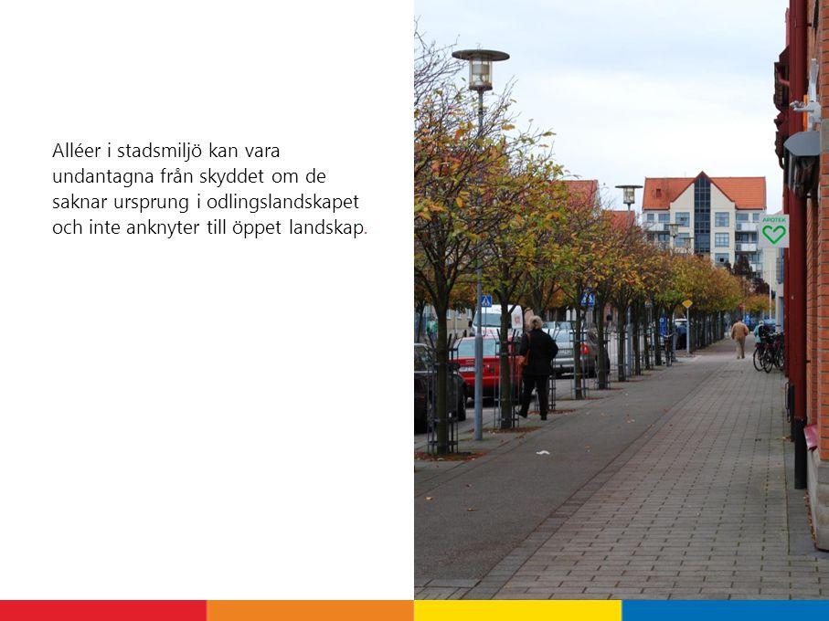 Alléer i stadsmiljö kan vara undantagna från skyddet om de saknar ursprung i odlingslandskapet och inte anknyter till öppet landskap.