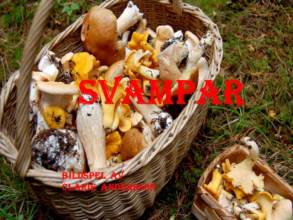 S SVampar Svampar Bildspel av Clarie Andersson