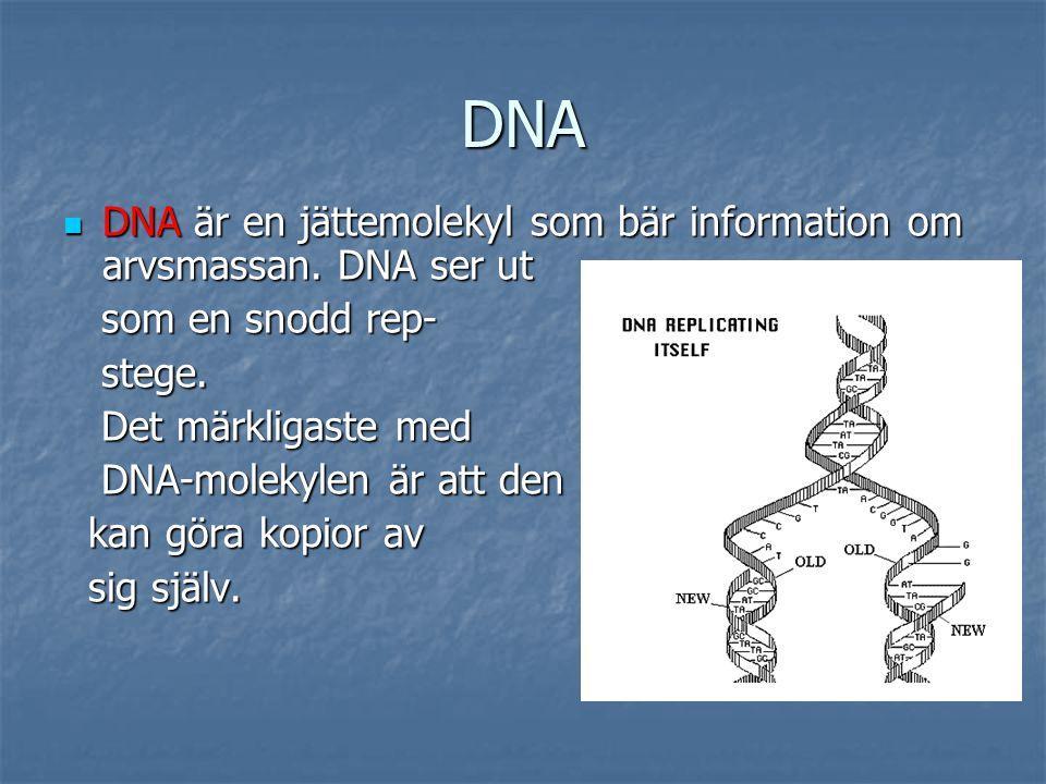 DNA DNA är en jättemolekyl som bär information om arvsmassan. DNA ser ut. som en snodd rep- stege.