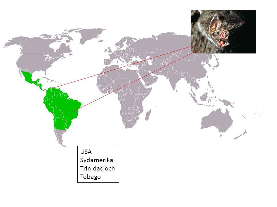 USA Sydamerika Trinidad och Tobago