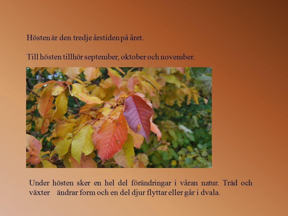 Hösten är den tredje årstiden på året.