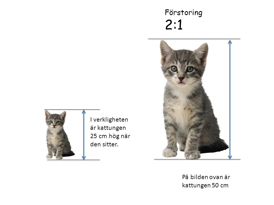 2:1 Förstoring I verkligheten är kattungen 25 cm hög när den sitter.