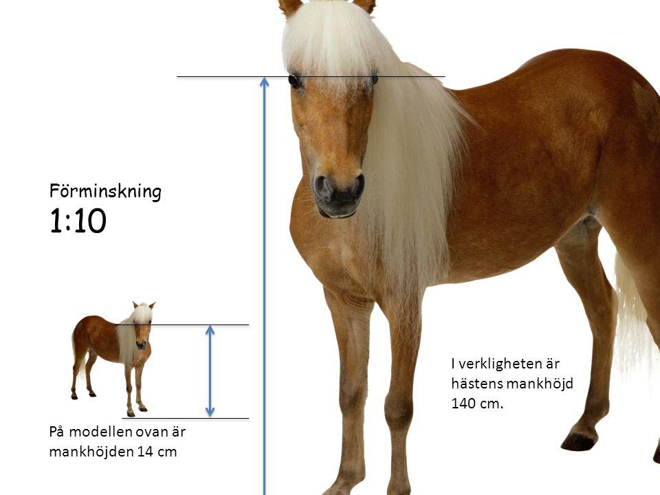 1:10 Förminskning I verkligheten är hästens mankhöjd 140 cm.
