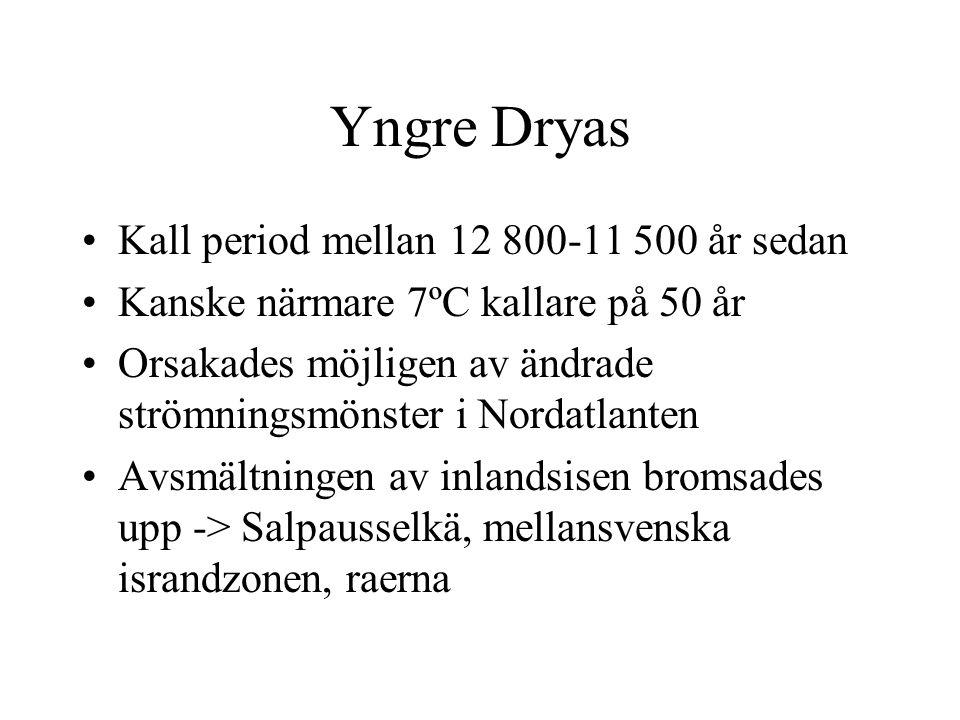 Yngre Dryas Kall period mellan 12 800-11 500 år sedan