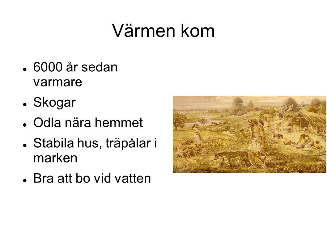 Värmen kom 6000 år sedan varmare Skogar Odla nära hemmet