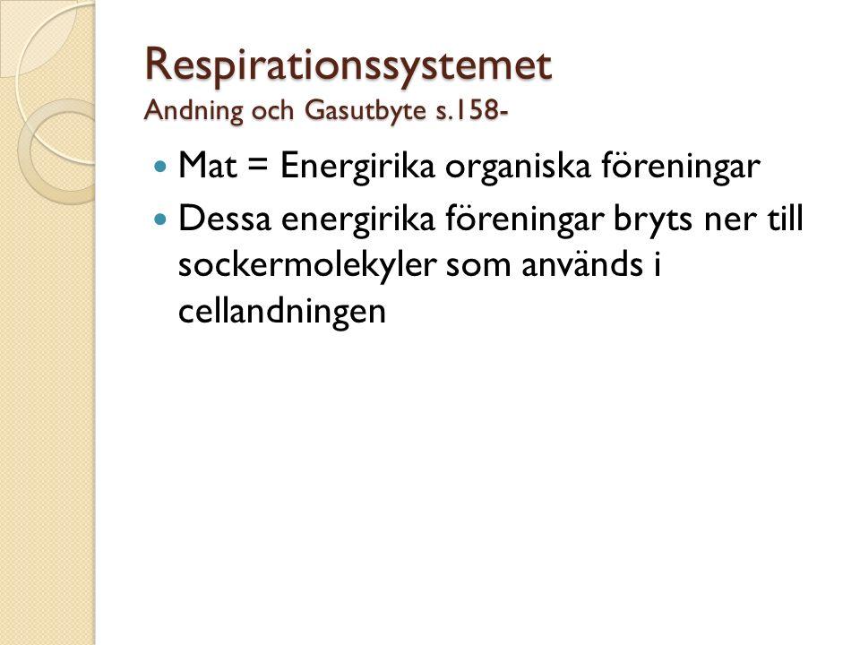 Respirationssystemet Andning och Gasutbyte s.158-