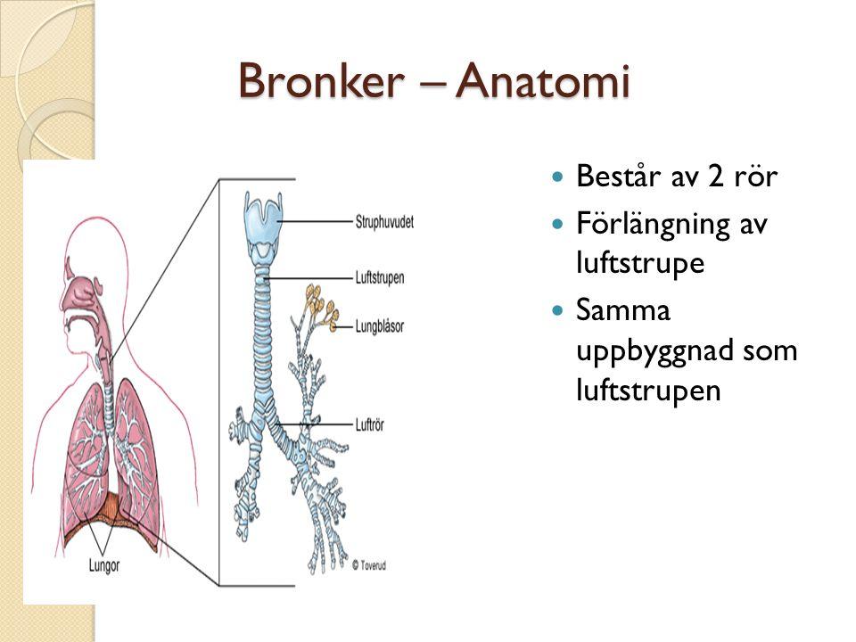 Bronker – Anatomi Består av 2 rör Förlängning av luftstrupe
