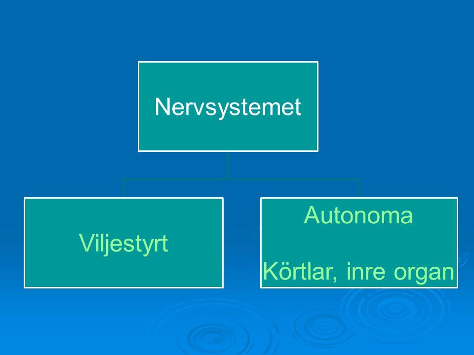 Nervsystemet Somatiska Viljestyrt Muskler, leder Autonoma Icke viljestyrt Körtlar, inre organ