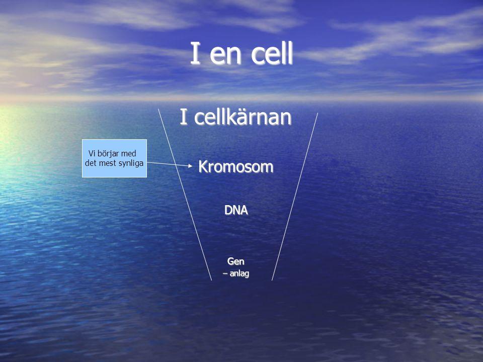 I en cell I cellkärnan Kromosom DNA Gen Vi börjar med det mest synliga