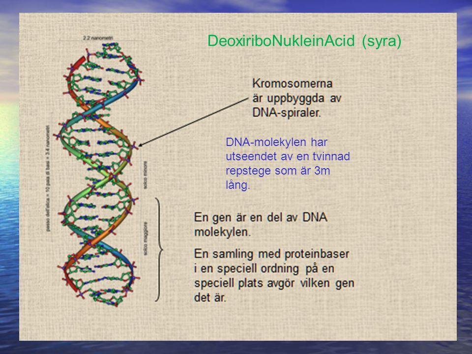 DeoxiriboNukleinAcid (syra)