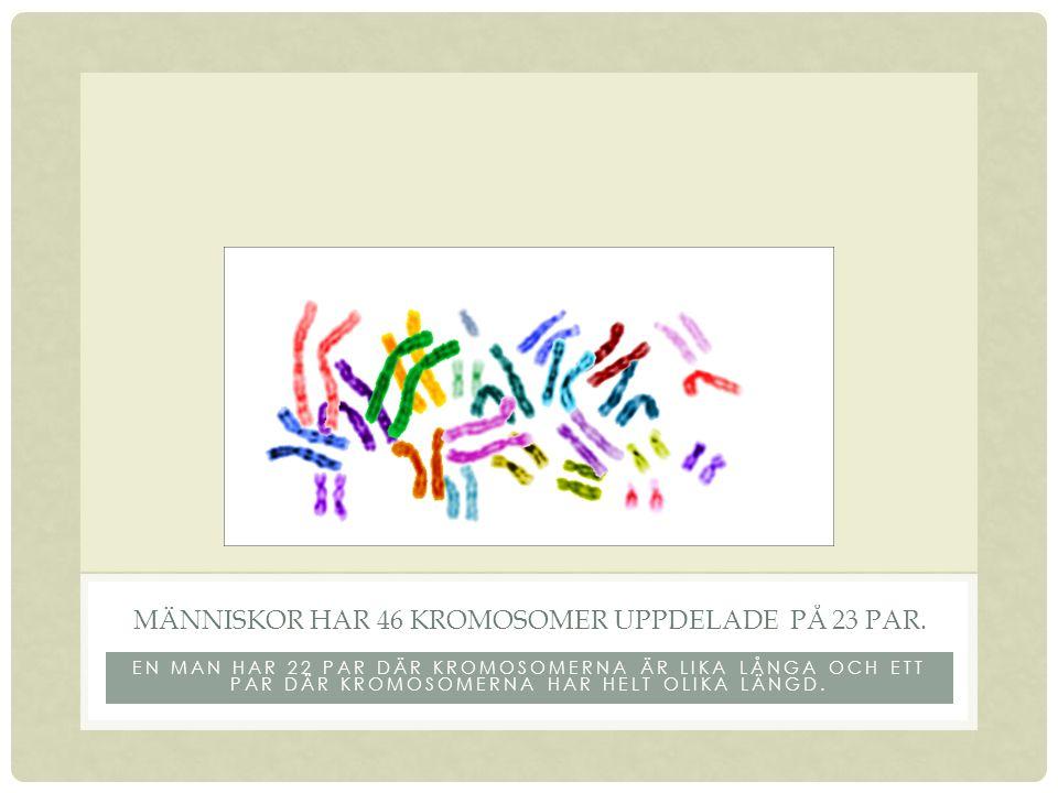 Människor har 46 kromosomer uppdelade på 23 par.