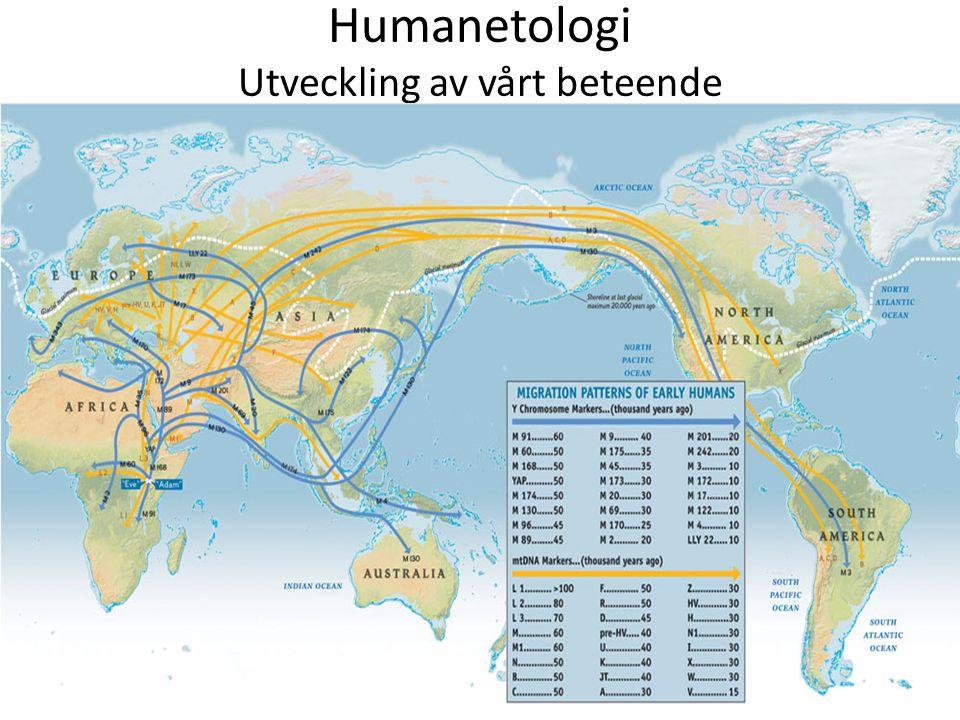Humanetologi Utveckling av vårt beteende