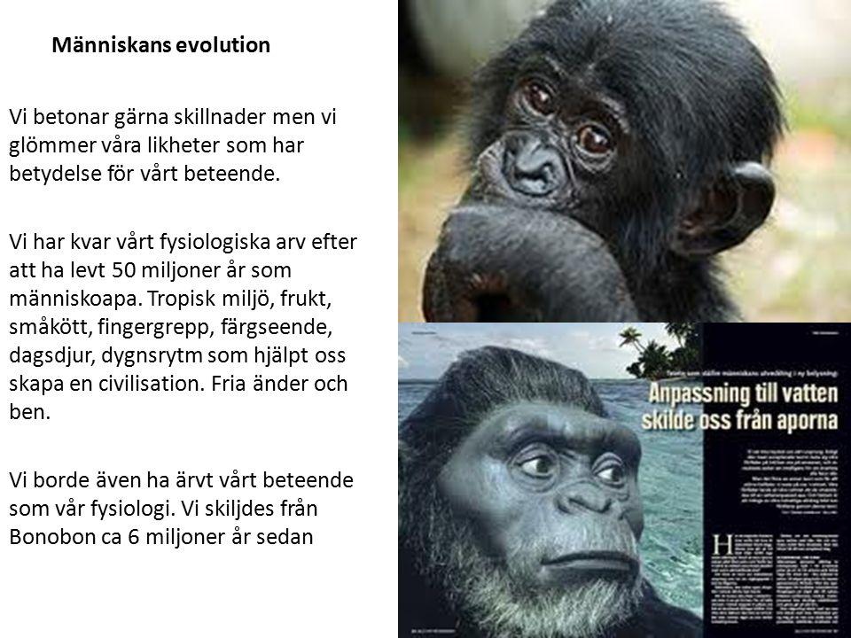 Människans evolution Vi betonar gärna skillnader men vi glömmer våra likheter som har betydelse för vårt beteende.